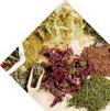 состав BioHelm: 20 вспомогательных ингредиентов