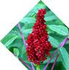 состав BioHelm: Сок плодов Сумаха
