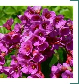 sos-ls-bad-1f