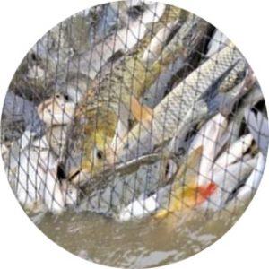 findfish сетка