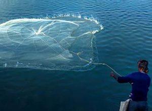 findfish сеть