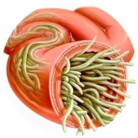Организм с паразитами