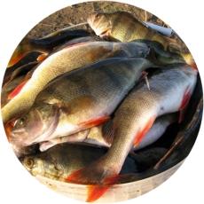 прекрасный улов с применением эхолота
