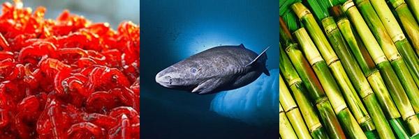 состав приманки для рыбы