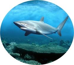 акулий хрящь для здоровья суставов