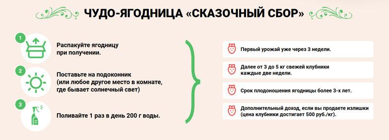 Как вырастить клубнику