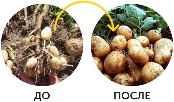 пример использования с картошкой